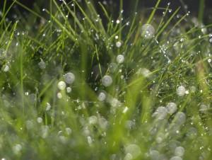 Traces of Rain