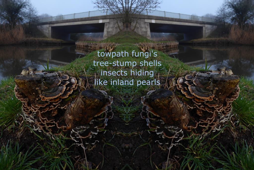 fungi photo-poem