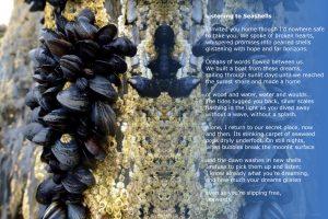 Listening to Seashells blue background