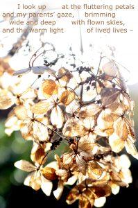 IMG_0089-004 skimming petals 3 smaller size